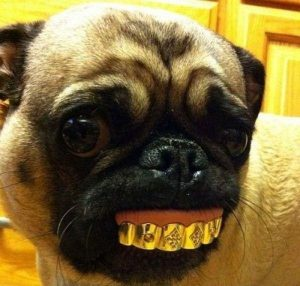 grillz grills gold dog hund
