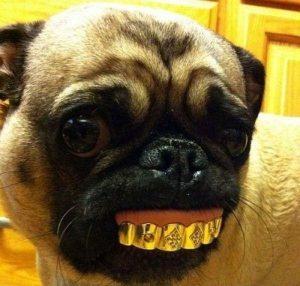 grillz grills gold dog hund